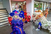"05 JULY 2014 - BANGKOK, THAILAND:  Chinese style lion dancers perform in a Chinese owned business in Bangkok during a parade for vassa. Vassa, called ""phansa"" in Thai, marks the beginning of the three months long Buddhist rains retreat when monks and novices stay in the temple for periods of intense meditation. Vassa officially starts July 11 but temples across Bangkok are holding events to mark the holiday all week.   PHOTO BY JACK KURTZ"