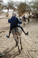 Niger, Agadez, Tidene, 2007. Donkeys are used at this well for pulling power to raise water. Watering a herd can take four to five hours every day.