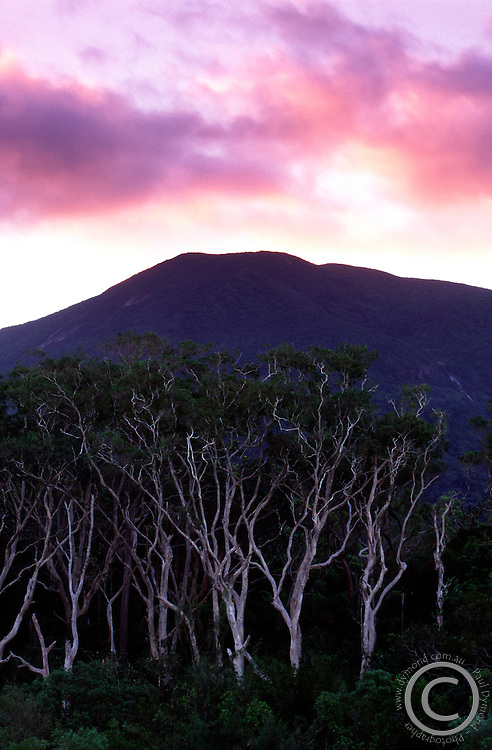 Sunrise over Melaleuca gum trees at the entrance to Noah Creek in Daintree National Park, far north Queensland, Australia