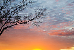 Silhouette of dead tree at sunset in Australia's Outback, South Australia,  Australia