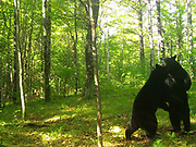 Photo courtesy of the Wisconsin DNR and Snapshot Wisconsin