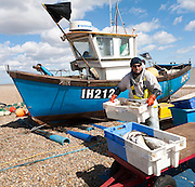 Small inshore fishing boat landing on the beach after six hours at sea with a catch of cod and skate, Aldeburgh, Suffolk, England
