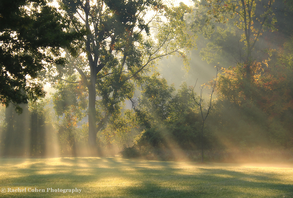 That Wonderful Light<br />