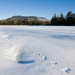 Animal tracks on a frozen pond near Little Lyford Pond Camps near Greenville, Maine, Winter.  Baker Mountain is in the distance.