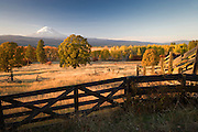 Looking at Mt, Adams across the Gifford Pinchot National Forest and ranches near Glenwood in the Cascade Mountain Range, WA, USA. autumn evening light
