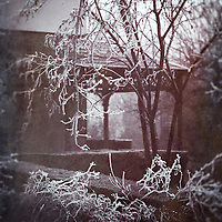 Ice hanging from shrubs in a country house garden