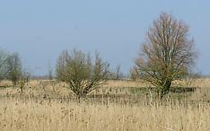 Oostvaardersplassen, Staatsbosbeheer, Lelystad, Almere, Flevoland, Netherlands
