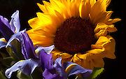 """I like the combination of the sunflower and Dutch Iris. The primary colors seem to say """"summer."""""""