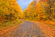 Country road with hardwood forest  in autumn colors<br />Goulais River<br />Ontario<br />Canada