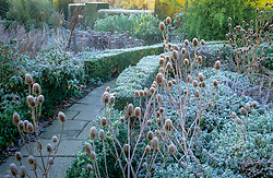 Great Dixter in winter with frosted teasels in the foreground