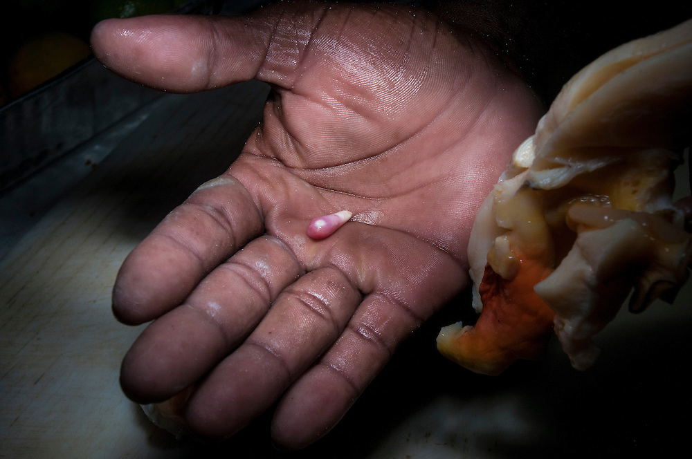 A conch fisherman finds a valuable conch pearl. These can sell for over $3000 as a raw material. Conch are the national food of the Bahamas. Scientists are predicting a fishery collapse is imminent, but how best to protect them is heatedly debated.