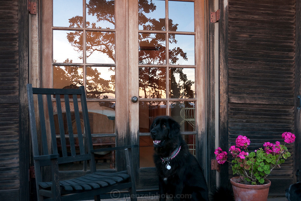 Menzel D'Aluisio guest house, Napa Valley, CA