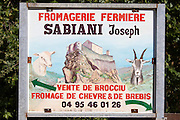 Fresh Brocciu cheese from the farm.