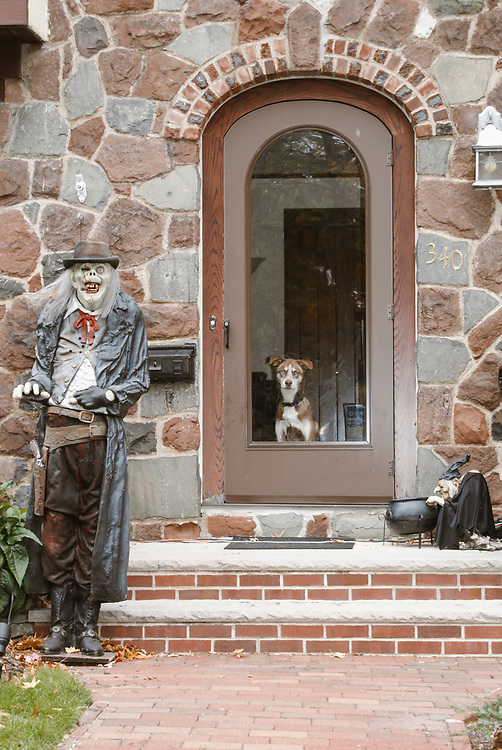 Photo of dog staring out front door of suburban home at Halloween. Hackensack, NJ