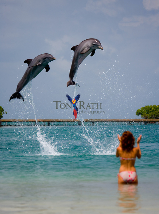 Dolphins jumping (bowing) at the Dolphin Encounter Program at Hugh Parkey's Belize Adventure Lodge, Spanish Lookout Caye, Belize
