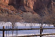 Orchard, Canyon, Winter, Snow, Capitol Reef, Capitol Reef National Park, Utah