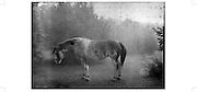 A Horse with no name   <br /> Postcard A6 - A5 Fr. 3.50