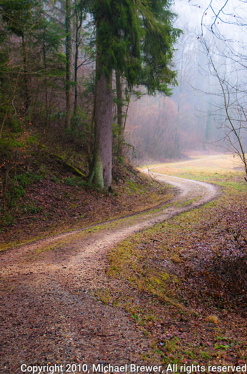 Atmospheric, winding dirt road along the edge of a Swiss forest in winter.