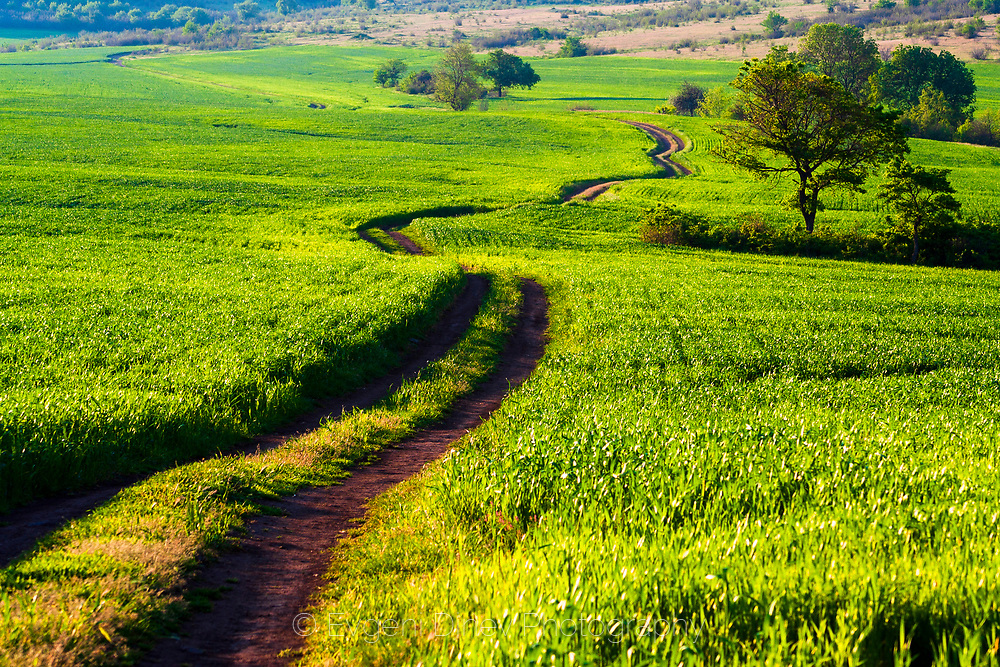 A dirt road through the spring fields