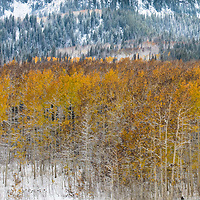 Guardsman Pass just after a snow storm blew through.  The aspen trees still had leaves on them making for a perfect composition.                         Gallery Print: 12w x 18h | Guardsman Pass, Utah