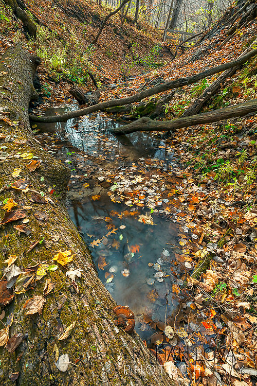 Autumn leaves on a riverbed;  MInnesota.