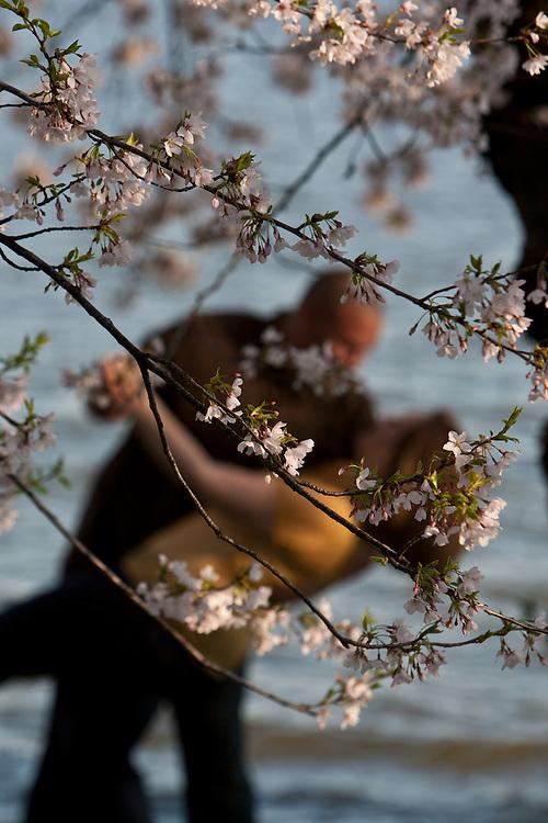 A couple enjoys the Cherry Blossom festival.