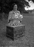 19/07/1952<br /> 07/19/1952<br /> 19 July 1952<br /> Dog show: All Breed Championship, 10th Annual Show of the Combined Canine Clubs at Terenure College,<br /> Templeogue Road Terenure Dublin. Miss A. MacNamee, 3 The Close, Mt. Merrion, Dublin, with her two West Highland terriers.