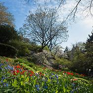 Spring flowers near Shakespeare Garden, Central Park.