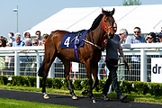 Bluebell Time - Ryan Hiscott/JMP - 19/04/2019 - PR - Bath Racecourse- Bath, England - Race 1 - Good Friday Race Meeting at Bath Racecourse