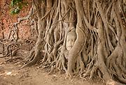 Wat Mahathat in Ayutthaya - Thailand