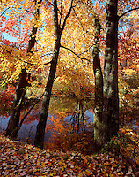Fall foliage at Ashuelot River Park, Keene, New Hampshire.