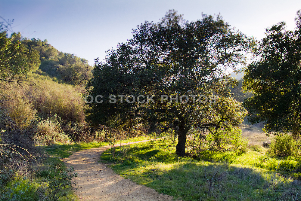 Towsley Canyon Hiking Trails