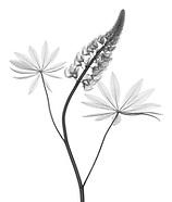 Holarctic Roses Legumes &tc