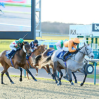 Lingfield 19th January
