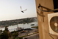 A pigeon flies off the ledge of a building in Medical City on Sunday, October 24, 2010 in Baghdad, Iraq.