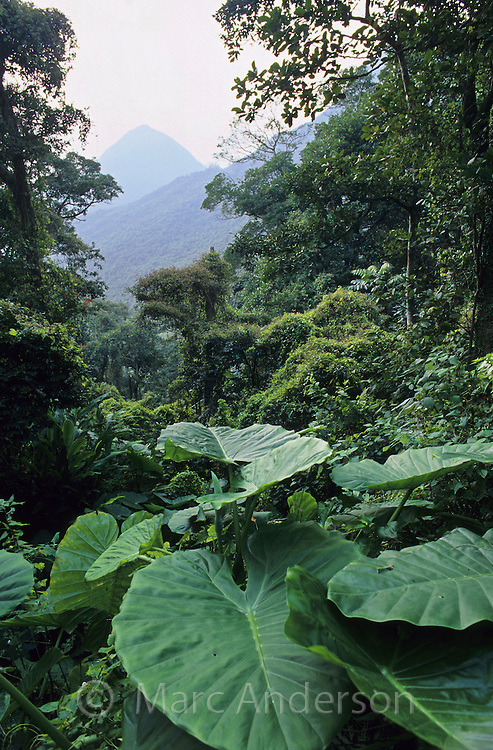 Rainforest plants and a view to distant hills, Victoria Gap Forest, Hong Kong, China.