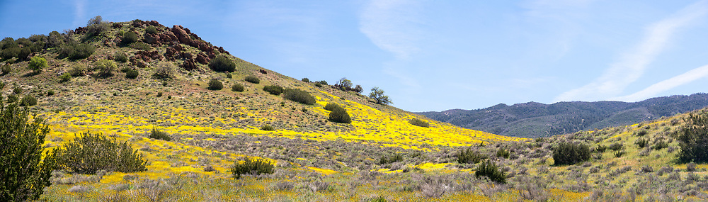 Rolling Hills With Flowers In Antelope Valley