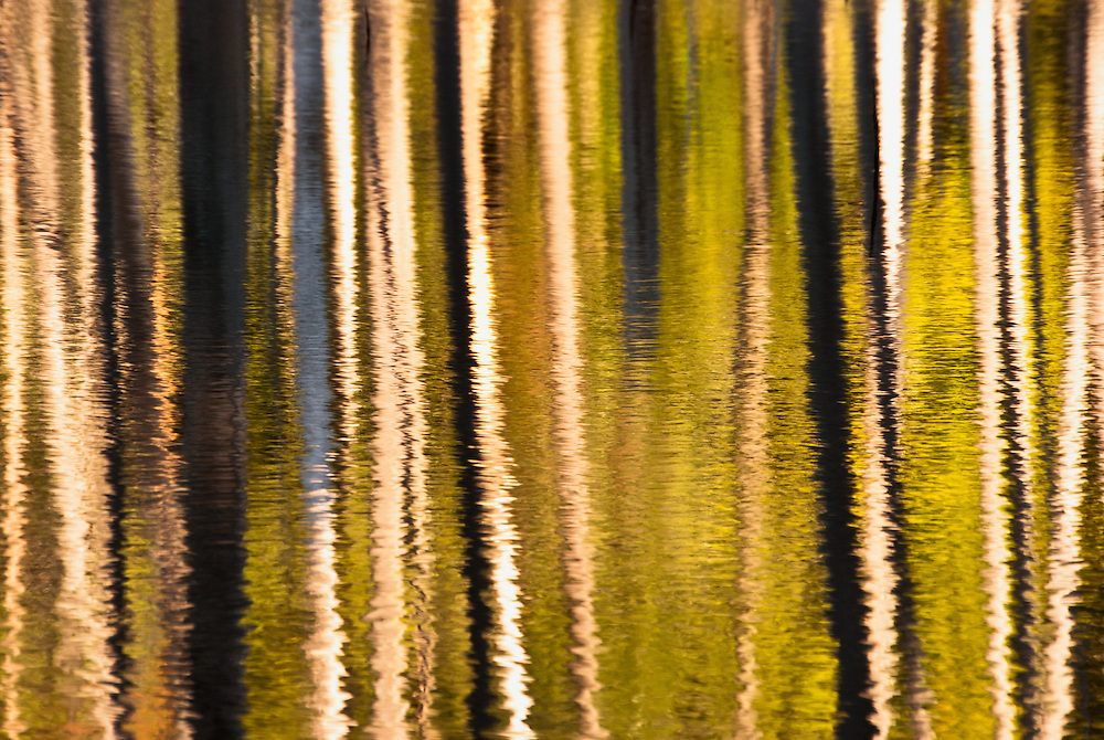 Photograph of trees reflected in a beaver pond in the Adirondacks