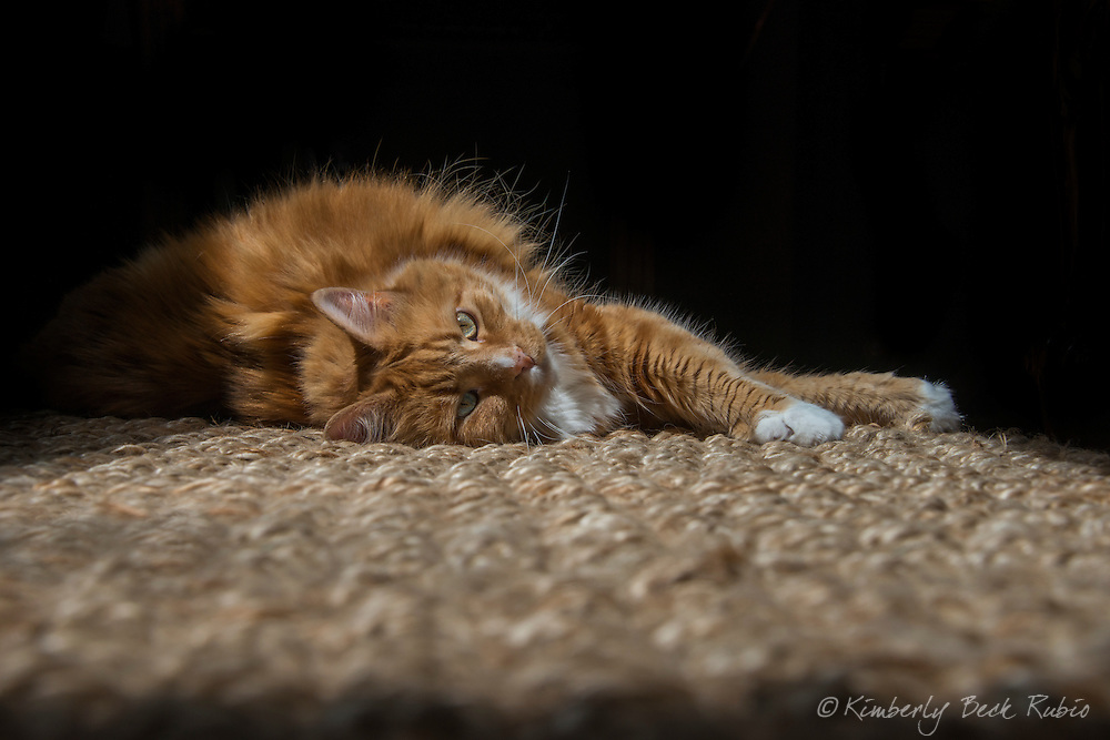Orange Maine Coon mix-breed cat lounging on a sisal rug in the sun.