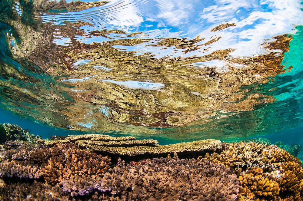 Underwaterview of a coral reef, Lady Elliot Island, Great Barrier Reef, Queensland, Australia