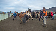 Corralling of horses in Eyjafjörður beginning of October 2017.