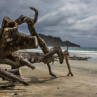 This remarkable piece of driftwood was the entrance to the Guiones Beach from the Blue Spirit Retreat Centre, Nosara, Costa Rica.