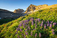 The morning sun illuminates the peak of Mount Timpanogos as the high mountain basin is filled with Summer lupine and indian paintbrush wildflowers.