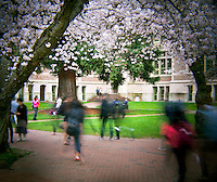 HL00008-00...WASHINGTON - Holga image of cherry trees blooming in the Quad at the University of Washington, Seattle.