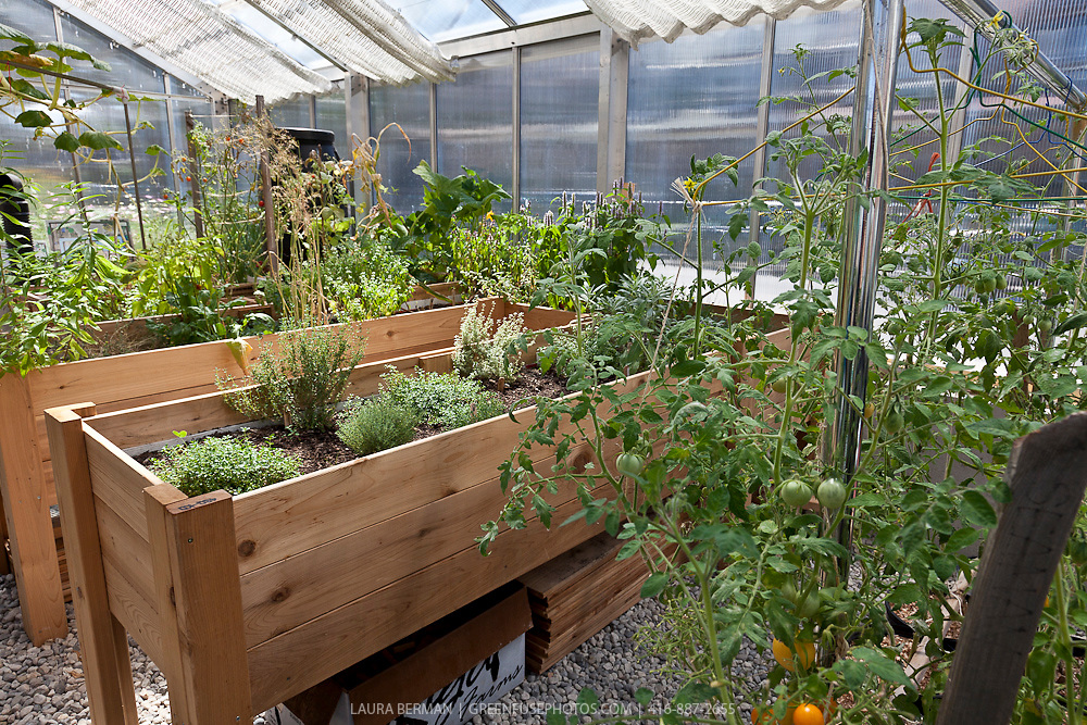 Vegetables and herbs in raised wooden planters. | GreenFuse Photos on fence for vegetables, raised beds for vegetables, wooden trellis for vegetables, greenhouses for vegetables, wooden containers for vegetables, planter boxes for vegetables,