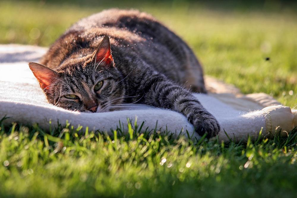 Stra?en- und Hauskatze Speedy auf einer Decke im Garten...Street- and housecat Speedy on a ceiling in the garden.