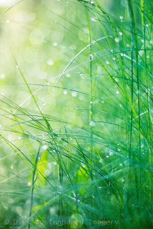 Water drops and light in grass<br />