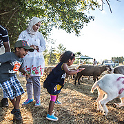"DUMFRIES, VA - SEP12: Jude Elsanousi, 4, and her brother Anas, 5, play with goats and sheep at the Halal Farm in Dumfries, VA, September 12, 2016, while their parents Hanane and Mohamed look on. The animals  will be slaughtered in honor of Eid al-Adha, the ""Feast of the Sacrifice"". (Photo by Evelyn Hockstein/For The Washington Post)"