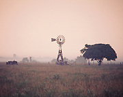 """Old windmill and single oak tree on a foggy morning in South Texas. NOTE: Click """"Shopping Cart"""" icon for available sizes and prices. If a """"Purchase this image"""" screen opens, click arrow on it. Doing so does not constitute making a purchase. To purchase, additional steps are required."""