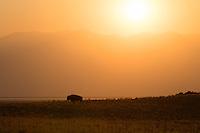 http://Duncan.co/bison-sunrise
